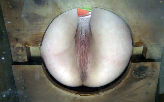 fat pussy white girl