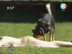 Dog messes with girls tanning at the park